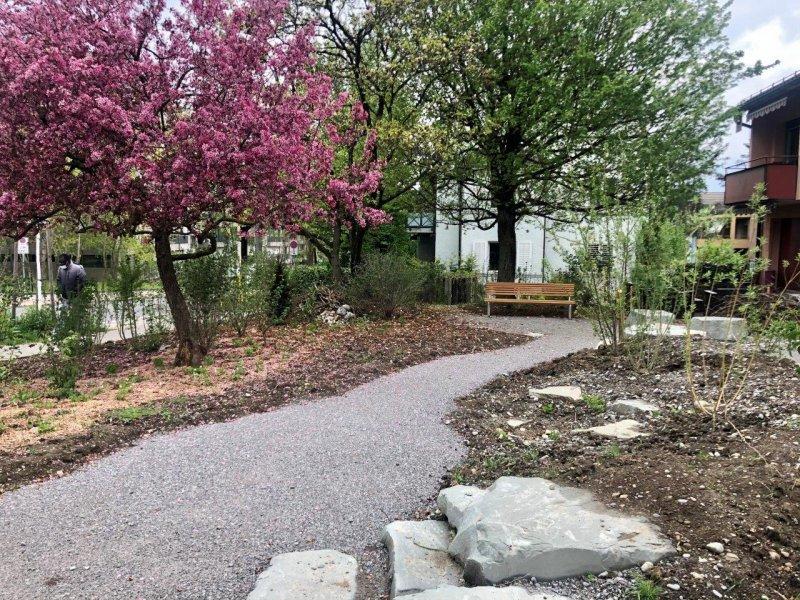 Biodiverser Garten Triemliplatz mit blühendem Prunus